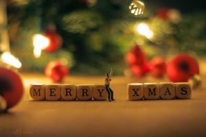 クリスマス写真① ブログ用